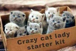 Cat-Lady-Starter-Kit